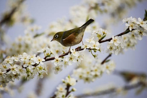 beautiful-bird-bloom-268496